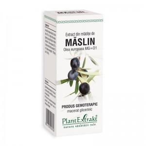 Extract din mladite de maslin - Olea Europaea (50 ml), Plantextrakt