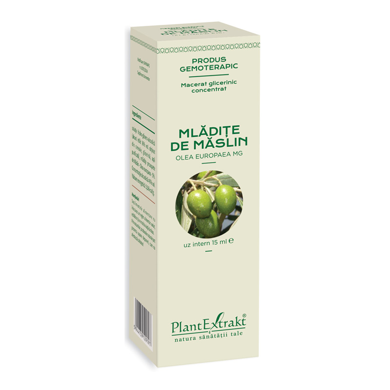 Macerat glicerinic concentrat din mladite de maslin - Olea Europaea (15ml), Plantextrakt