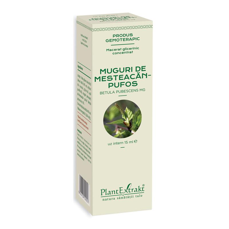 Macerat glicerinic concentrat din muguri de mesteacan pufos - Betula Pubescens (15ml), Plantextrakt