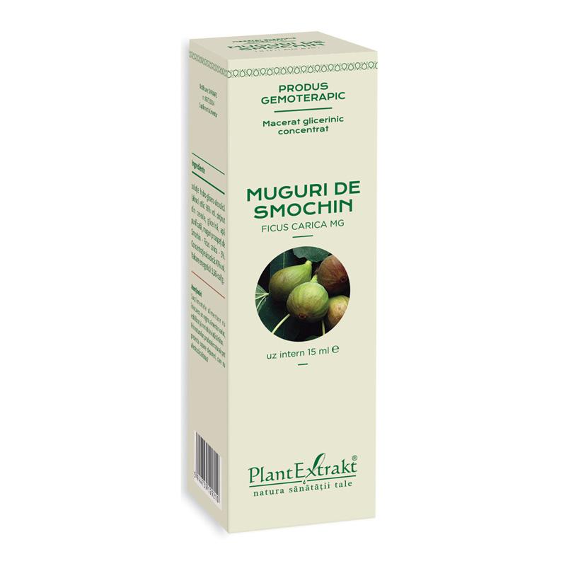 Macerat glicerinic concentrat din muguri de smochin - Ficus Carica (15 ml), Plantextrakt