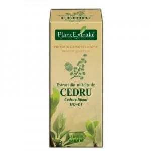 Extract din mlădiţe de CEDRU - Cedrus libani MG=D1 (50 ml)