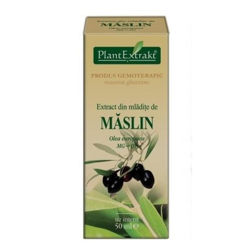 Extract din mladite de MASLIN - Olea europaea (50 ml)
