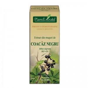 Extract din muguri de COACAZ NEGRU - Ribes nigrum (50 ml)