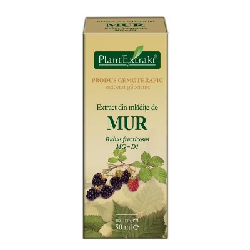 Extract din mladite de MUR Rubus fructicosus MG=D1 (50 ml)